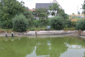 vylov-rybnika-2021-0008